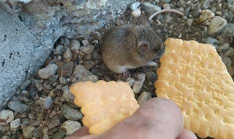 Bahçesindeki fareyi bisküvi ile besliyor