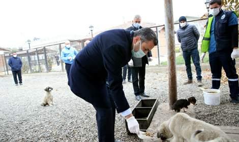 Başkan Eroğlu, 'Hayvanlar bizlere Allah'ın emanetidir'