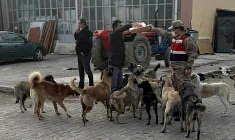 Jandarma, kısıtlamada sokak hayvanlarını besledi