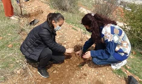 Tokat'ta, narkotik eğitimi alan anneler fidan dikti