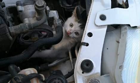 Otomobilin motoruna giren kediyi itfaiye çıkardı