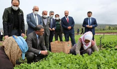 'Seracılık ve Sebze Tarımında Yeni Ufuklar' Konulu Tarla Günü