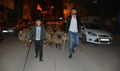 Tokat'ta ana caddeden geçirilen koyun sürüsünden ilginç görüntüler