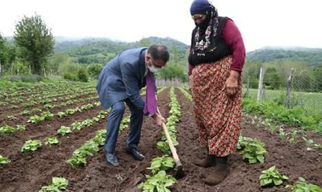 Vali Ozan Balcı, Başçiftlik geç turfanda meyve bahçesinde